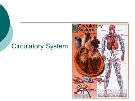 Circulatory System. Transports materials throughout the body  Diffusion alone is a slow process so your body uses the circulatory system to speed the.