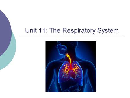 Unit 11: The Respiratory System. Warm up  Draw what you know of the respiratory system Start with the mouth and end with the diaphragm.