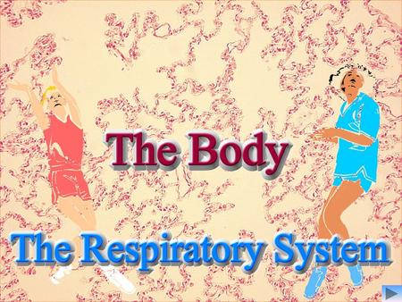 Objectives By the end of the lesson you will be able to:- Identify the gross structures of the respiratory system; Describe the function of 4 of the gross.