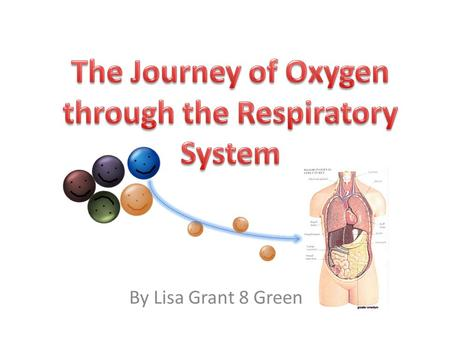 By Lisa Grant 8 Green. Meet Loz the oxygen cell. Loz is going to show a day in his life as he travels through the respiratory system. Loz allows people.