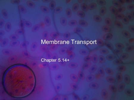 Membrane Transport Chapter 5.14+. What you need to know! The role of diffusion (osmosis), active transport, and bulk flow in the movement of water and.