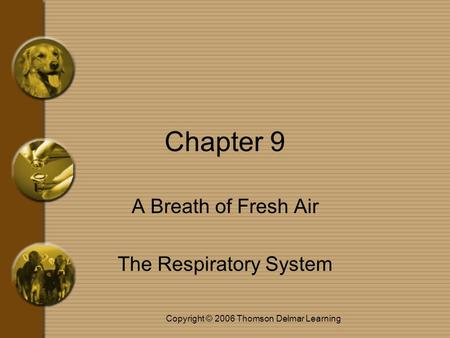 Copyright © 2006 Thomson Delmar Learning Chapter 9 A Breath of Fresh Air The Respiratory System.