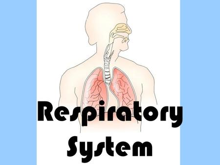 Respiratory System. Respiratory System – gas exchange Path of the Respiratory System: Air enters the mouth or nose Air continues down the pharynx past.