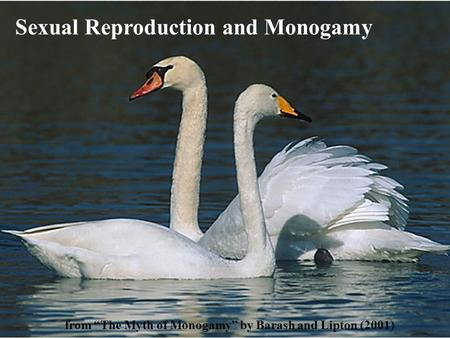 "Sexual Reproduction and Monogamy from ""The Myth of Monogamy"" by Barash and Lipton (2001)"