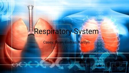 Respiratory System Casey, Ryan, Esdras, Kaitlyn. Respiratory System The respiratory system is the set of organs that allow a person to breathe and exchange.