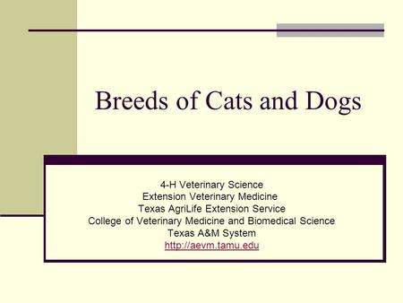 Breeds of Cats and Dogs 4-H Veterinary Science Extension Veterinary Medicine Texas AgriLife Extension Service College of Veterinary Medicine and Biomedical.