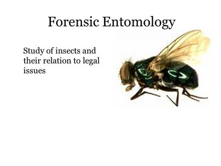 Forensic Entomology Study of insects and their relation to legal issues.