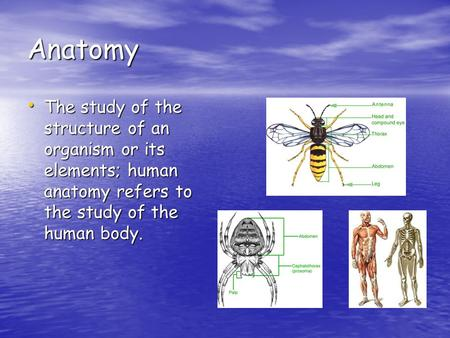 Anatomy The study of the structure of an organism or its elements; human anatomy refers to the study of the human body. The study of the structure of an.