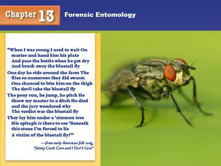 Forensic Entomology. Taxonomy Classification of Living Things in an Orderly Way We are interested in the phylum Arthropoda; class Insecta; orders: Diptera.