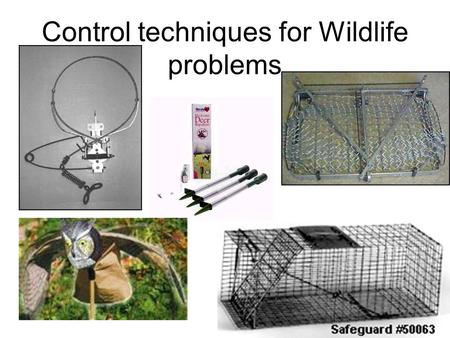 Control techniques for Wildlife problems. The problem When wildlife damage is a recurring problem, a landowner, property manager or occupant may want.
