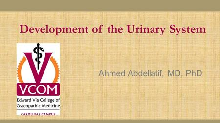 Development of the Urinary System Ahmed Abdellatif, MD, PhD.