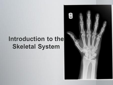 The skeletal system includes: The skeletal system includes: bones of the skeleton bones of the skeleton cartilages, ligaments and other stabilizing connective.