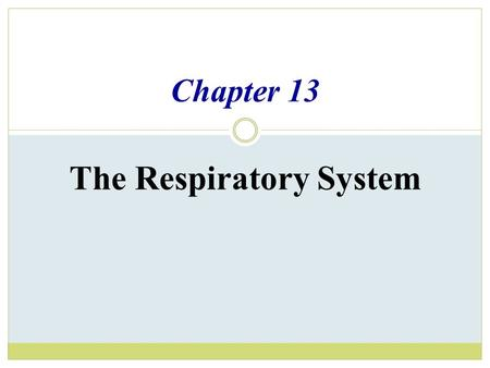 Chapter 13 The Respiratory System. Organs of the Respiratory system  Nose  Pharynx  Larynx  Trachea  Bronchi  Lungs – alveoli.