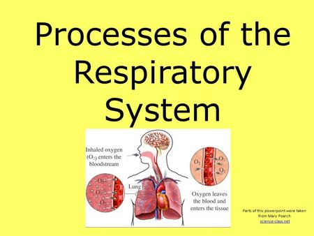 Processes of the Respiratory System Parts of this powerpoint were taken from Mary Poarch science-class.net.