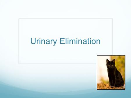 Urinary Elimination. Risk Factors for Problems of Elimination Conditions that result in Neurologic impairment (Neurogenic bladder) Trauma to the brain.