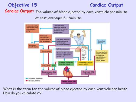 Objective 15Cardiac Output The volume of blood ejected by each ventricle per minute at rest, averages 5 L/minute Cardiac Output: What is the term for the.