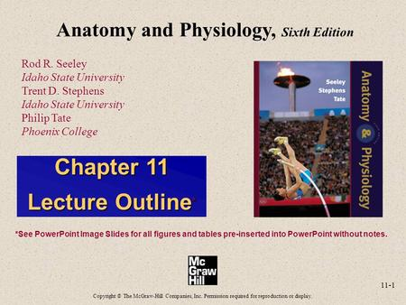 11-1 Anatomy and Physiology, Sixth Edition Rod R. Seeley Idaho State University Trent D. Stephens Idaho State University Philip Tate Phoenix College Copyright.