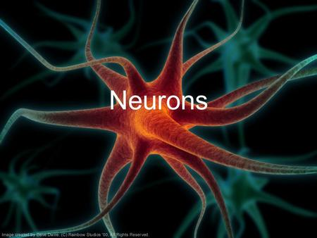 Neurons. Nervous System –Central nervous system (CNS): Brain Spinal cord –Peripheral nervous system (PNS): Sensory neurons Motor neurons (somatic and.