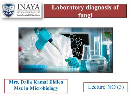 Laboratory diagnosis of fungi Mrs. Dalia Kamal Eldien Msc in Microbiology Lecture NO (3)