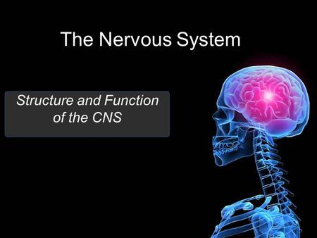 The Nervous System Structure and Function of the CNS.