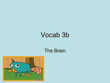 Vocab 3b The Brain. area at the front of the parietal lobes that registers and processes body touch and movement sensations.