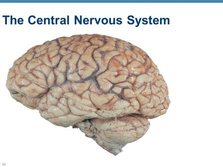 Copyright © 2010 Pearson Education, Inc. The Central Nervous System.