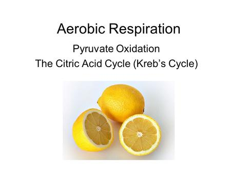 Aerobic Respiration Pyruvate Oxidation The Citric Acid Cycle (Kreb's Cycle)