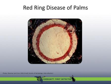 Red Ring Disease of Palms Photos: Brammer and Crow 2001 (Credit: Society of Nematology slide collection)