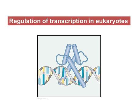 Regulation of transcription in eukaryotes. Regulation of transcription is usually complex in eukaryotes.