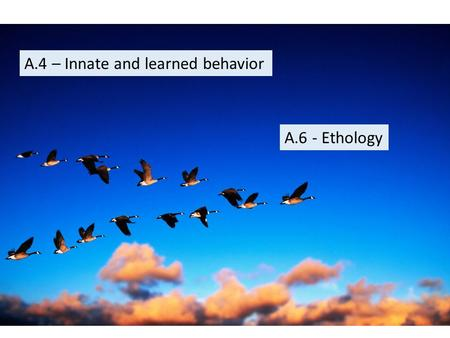 A.4 – Innate and learned behavior A.6 - Ethology.