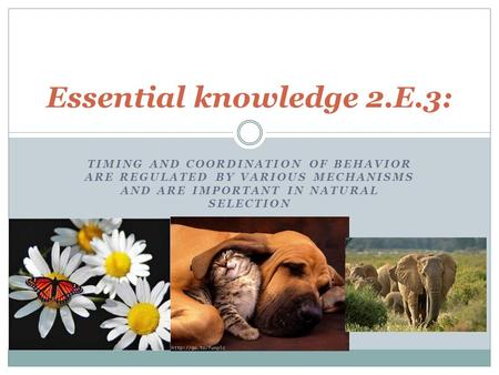 Essay #2 May 2016: Knowledge and Natural Selection.
