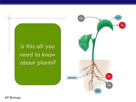 AP Biology Is this all you need to know about plants?