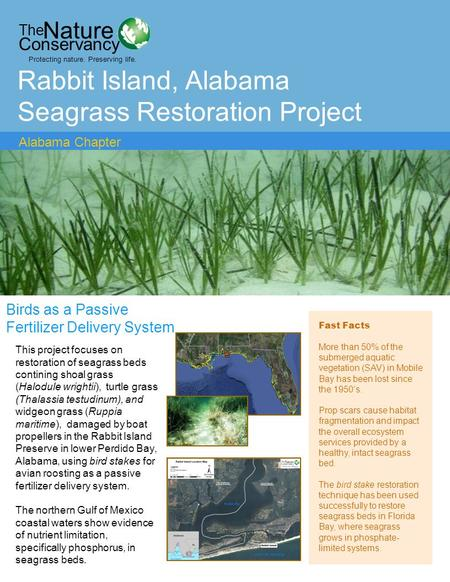 Rabbit Island, Alabama Seagrass Restoration Project Alabama Chapter This project focuses on restoration of seagrass beds contining shoal grass (Halodule.