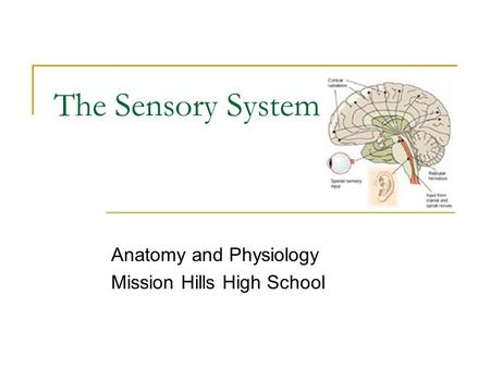 The Sensory System Anatomy and Physiology Mission Hills High School.