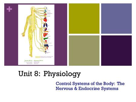+ Unit 8: Physiology Control Systems of the Body: The Nervous & Endocrine Systems.