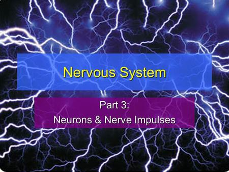 Nervous System Part 3: Neurons & Nerve Impulses. Neuron Structure A neuron is a nerve cellA neuron is a nerve cell The nucleus of a neuron and most of.