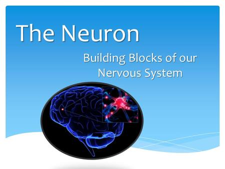 The Neuron Building Blocks of our Nervous System.