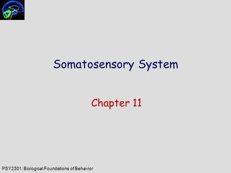PSY2301: Biological Foundations of Behavior Somatosensory System Chapter 11.