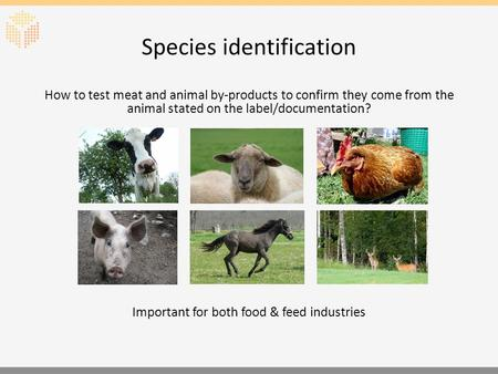 Species identification How to test meat and animal by-products to confirm they come from the animal stated on the label/documentation? Important for both.