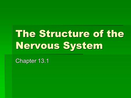 The Structure of the Nervous System Chapter 13.1.