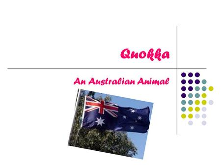 Quokka An Australian Animal. How Do Quokkas Breed? Quokka's mate from January to March each year. The Quokka is pregnant for four weeks. The quokka then.