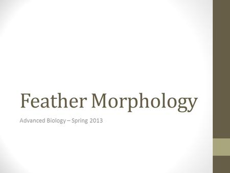 Feather Morphology Advanced Biology – Spring 2013.