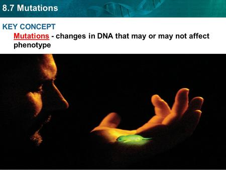 8.7 Mutations KEY CONCEPT Mutations - changes in DNA that may or may not affect phenotype.