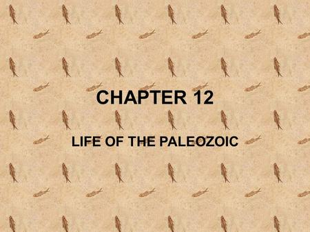 CHAPTER 12 LIFE OF THE PALEOZOIC. f10_01_pg268 Paleozoic Animals.