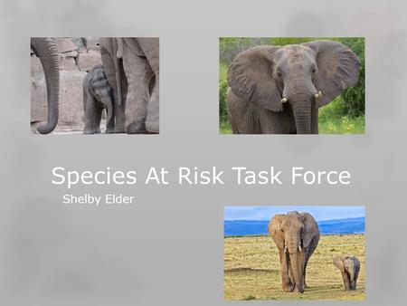 Species At Risk Task Force Shelby Elder. Background Information -Biodiversity: The range of organisms present in a particular ecological community or.