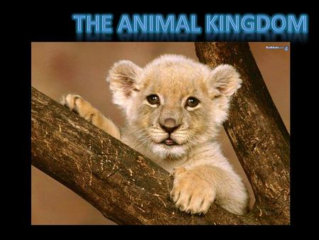 The animal kingdom is made up of 2 main groups: Animals with back bones Animals without bones.