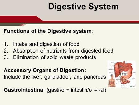 the digestive system explain the structure of the digestive system, Human Body