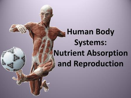 Human Body Systems: Nutrient Absorption and Reproduction.