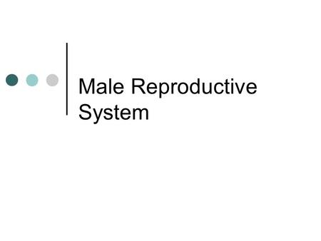Male Reproductive System. Scrotum Purpose: - encase / protect the testes - regulate temperature of testes *sperm production is ideal about 2 degrees cooler.