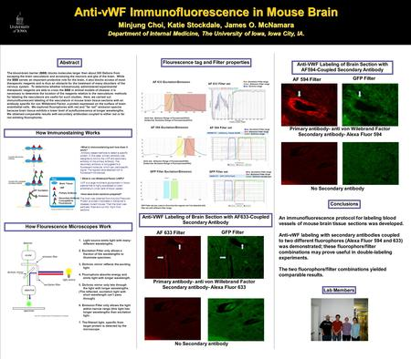 23W!~ Anti-vWF Immunofluorescence in Mouse Brain Minjung Choi, Katie Stockdale, James O. McNamara Department of Internal Medicine, The University of Iowa,